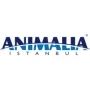 Animalia, Istanbul